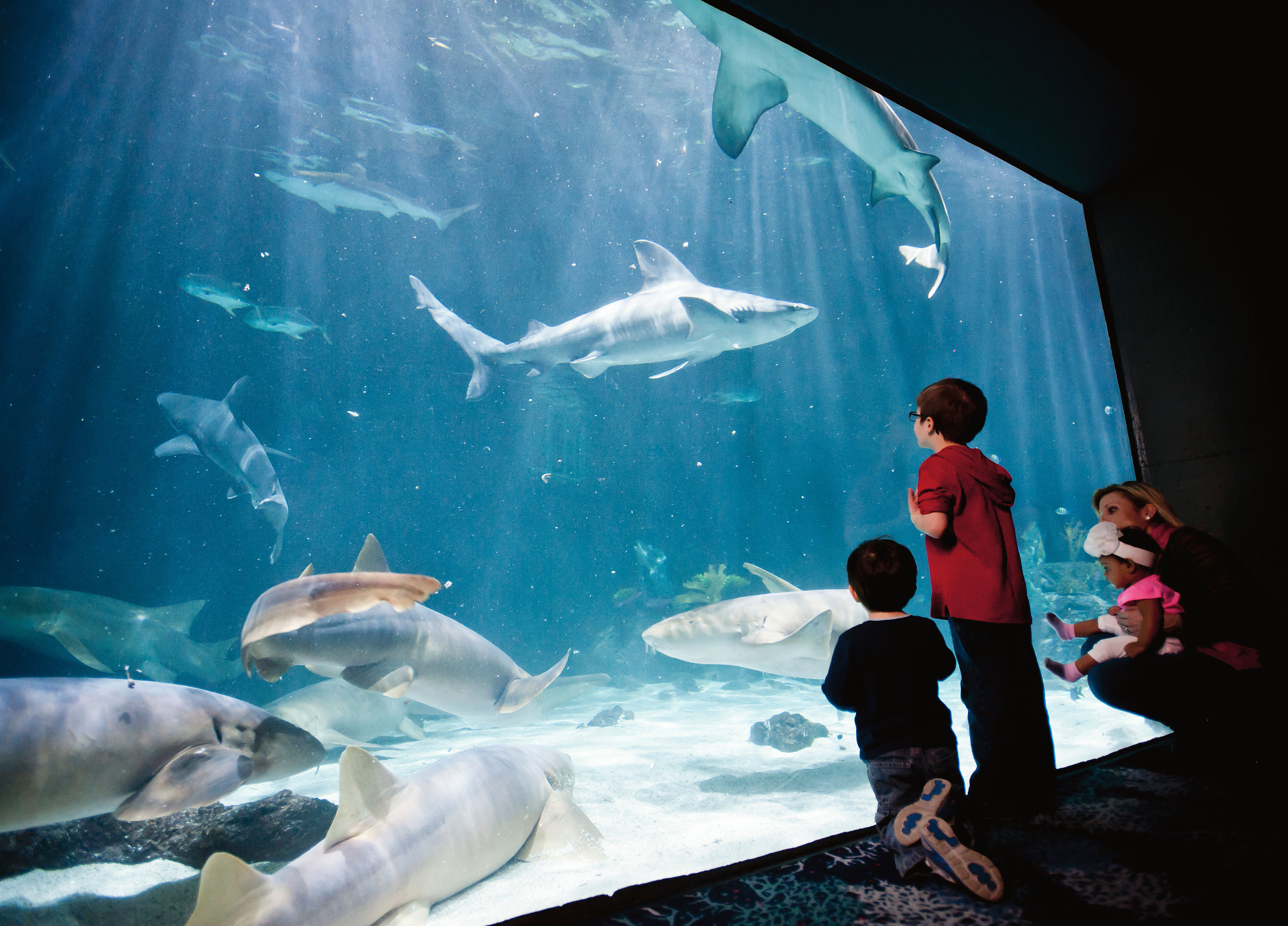 Ocean Commotion At Point Defiance Zoo Aquarium